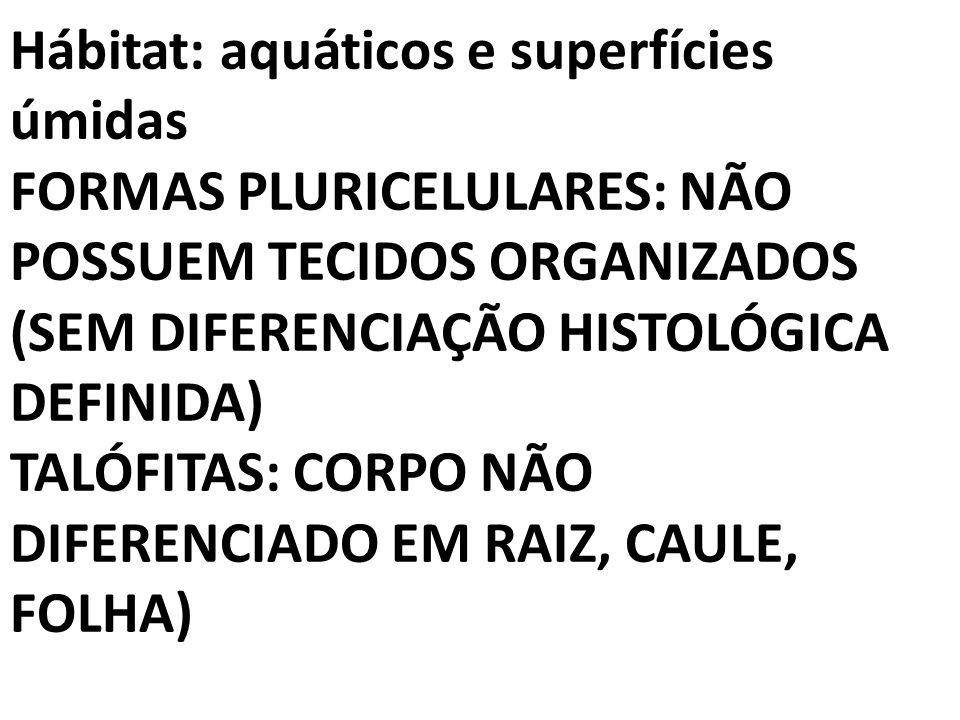 Hábitat: aquáticos e superfícies úmidas FORMAS PLURICELULARES: NÃO POSSUEM TECIDOS ORGANIZADOS (SEM DIFERENCIAÇÃO HISTOLÓGICA DEFINIDA) TALÓFITAS: CORPO NÃO DIFERENCIADO EM RAIZ, CAULE, FOLHA)