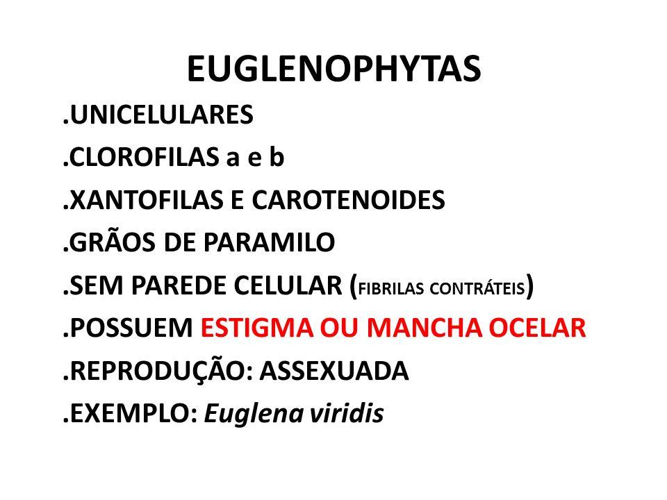 EUGLENOPHYTAS .UNICELULARES .CLOROFILAS a e b