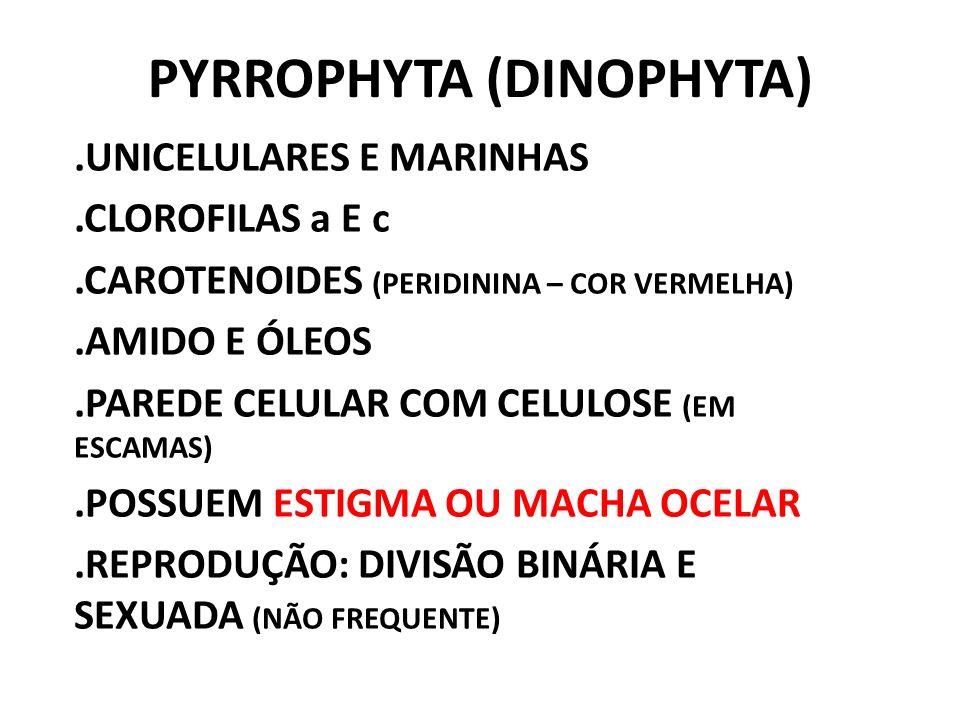 PYRROPHYTA (DINOPHYTA)