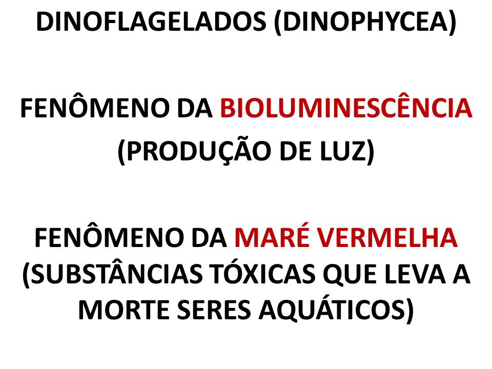 DINOFLAGELADOS (DINOPHYCEA) FENÔMENO DA BIOLUMINESCÊNCIA