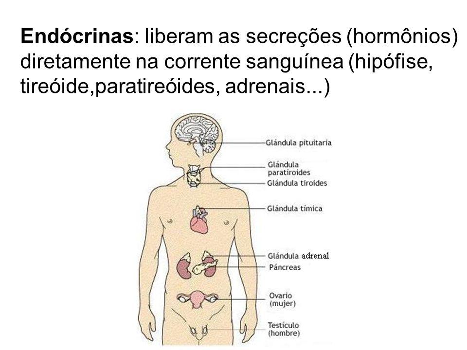 Endócrinas: liberam as secreções (hormônios)