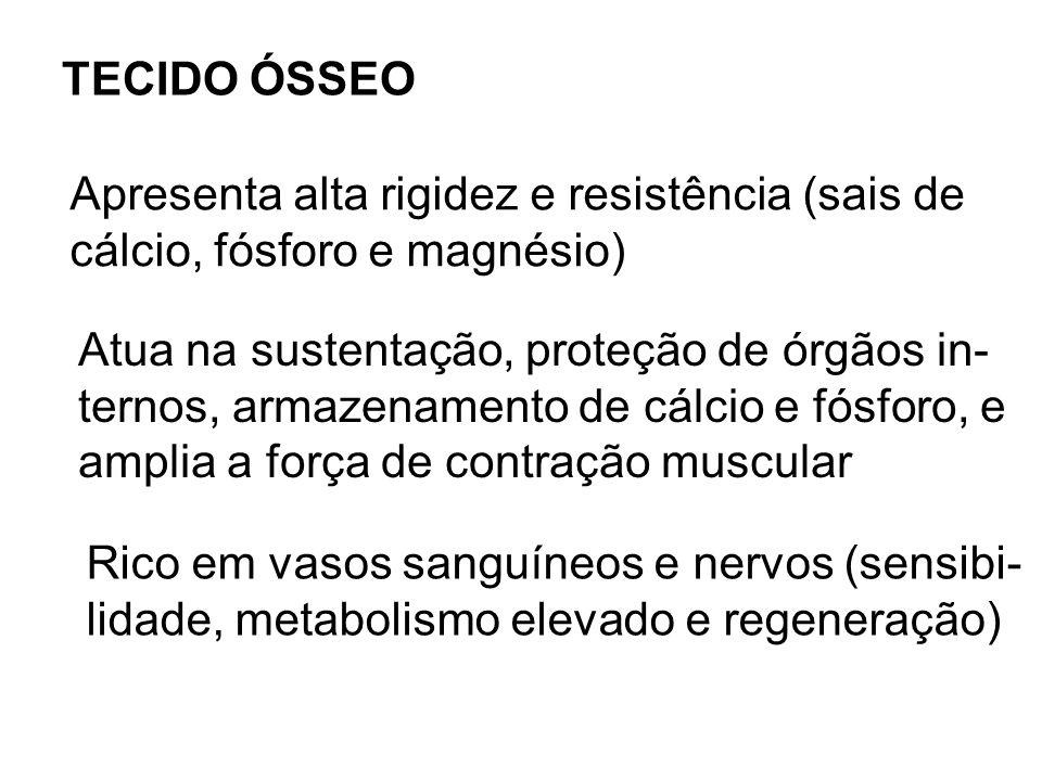 TECIDO ÓSSEO Apresenta alta rigidez e resistência (sais de. cálcio, fósforo e magnésio) Atua na sustentação, proteção de órgãos in-