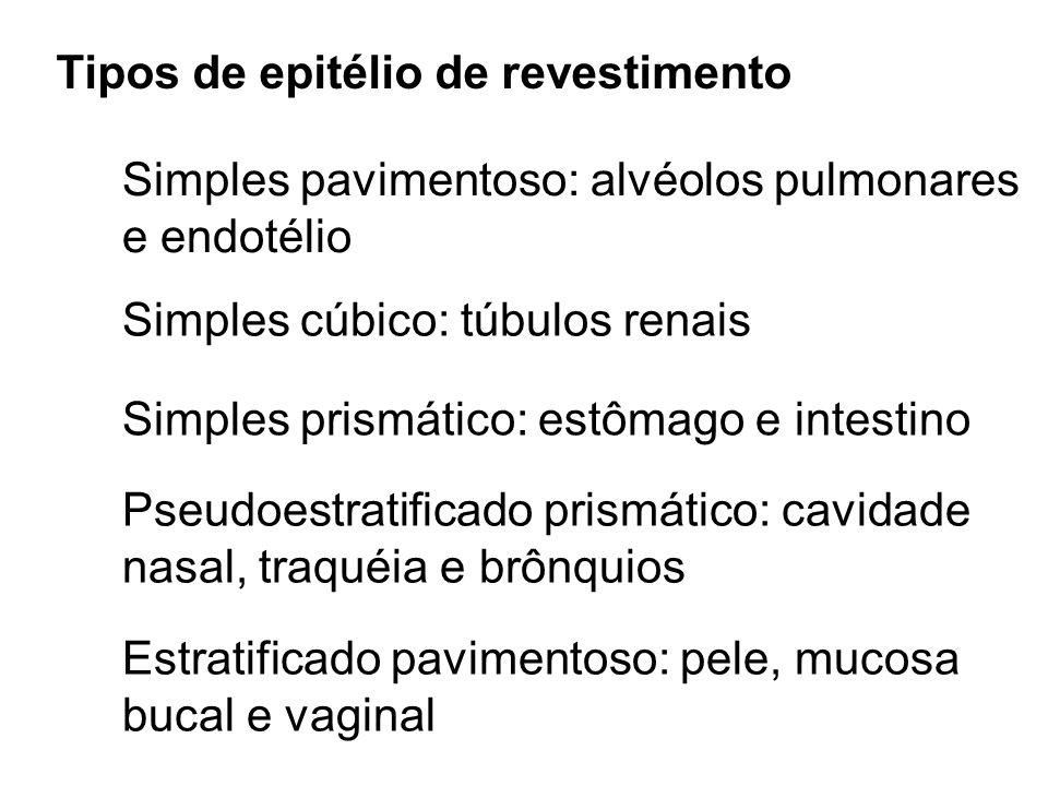 Tipos de epitélio de revestimento