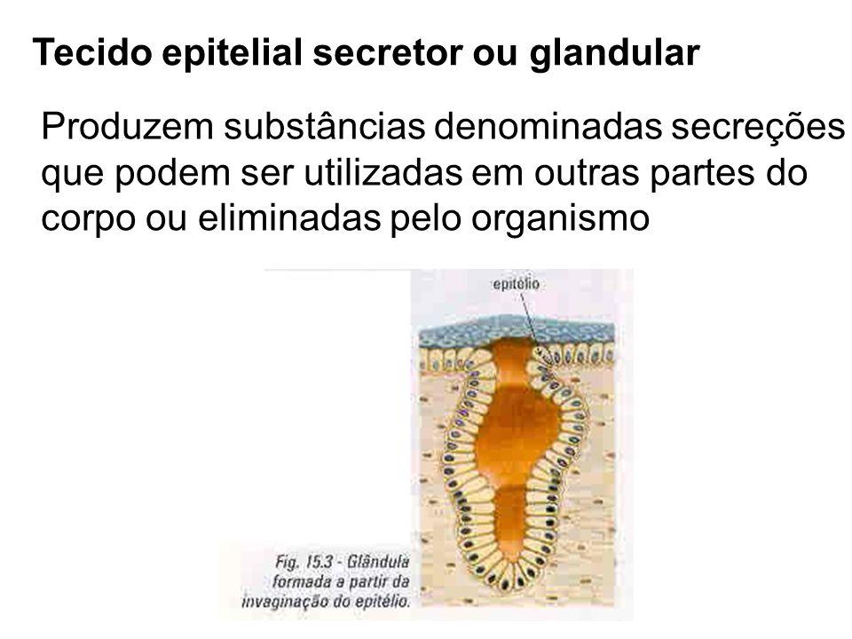Tecido epitelial secretor ou glandular