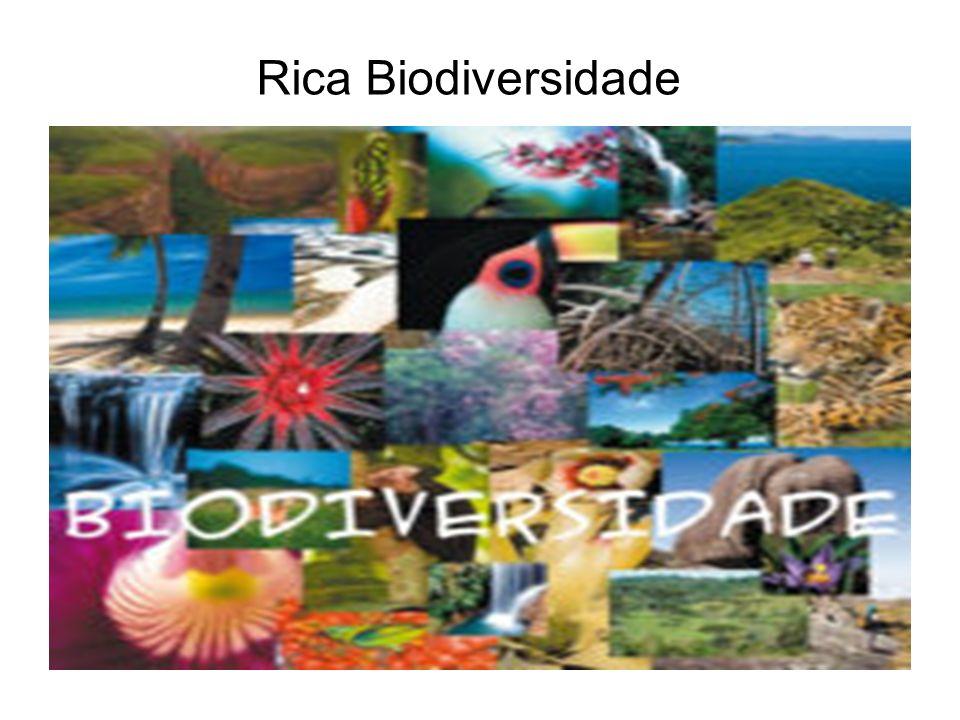 Rica Biodiversidade
