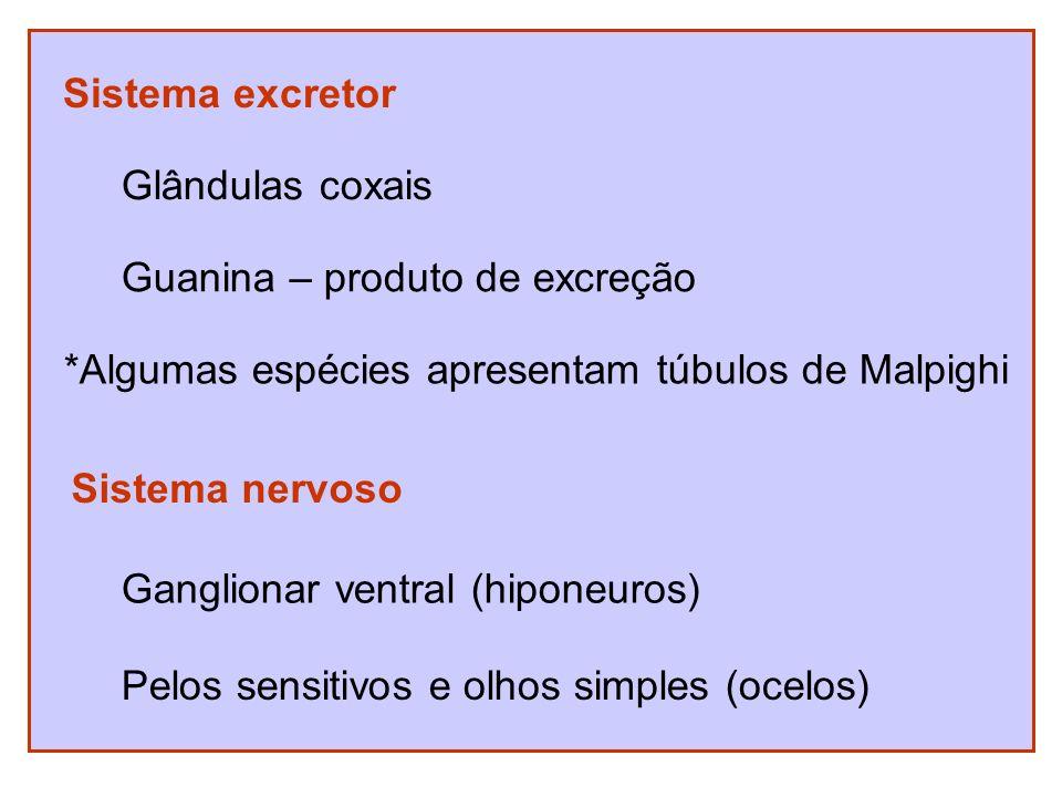 Sistema excretor Glândulas coxais. Guanina – produto de excreção. *Algumas espécies apresentam túbulos de Malpighi.