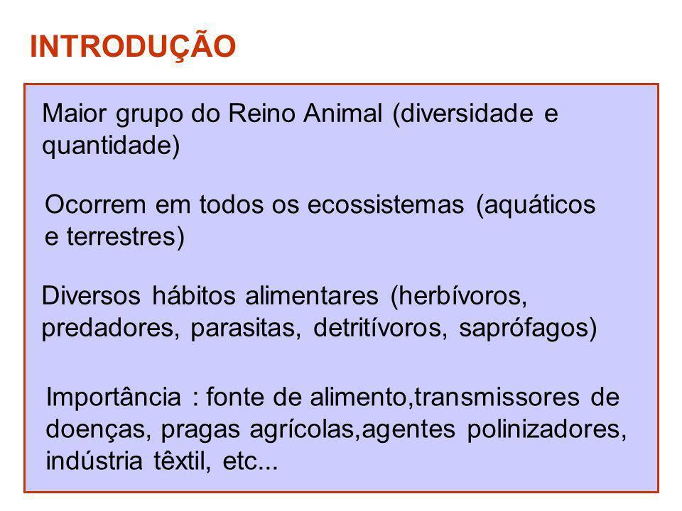 INTRODUÇÃO Maior grupo do Reino Animal (diversidade e quantidade)