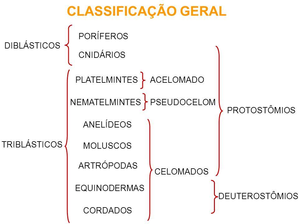 CLASSIFICAÇÃO GERAL PORÍFEROS DIBLÁSTICOS CNIDÁRIOS PLATELMINTES