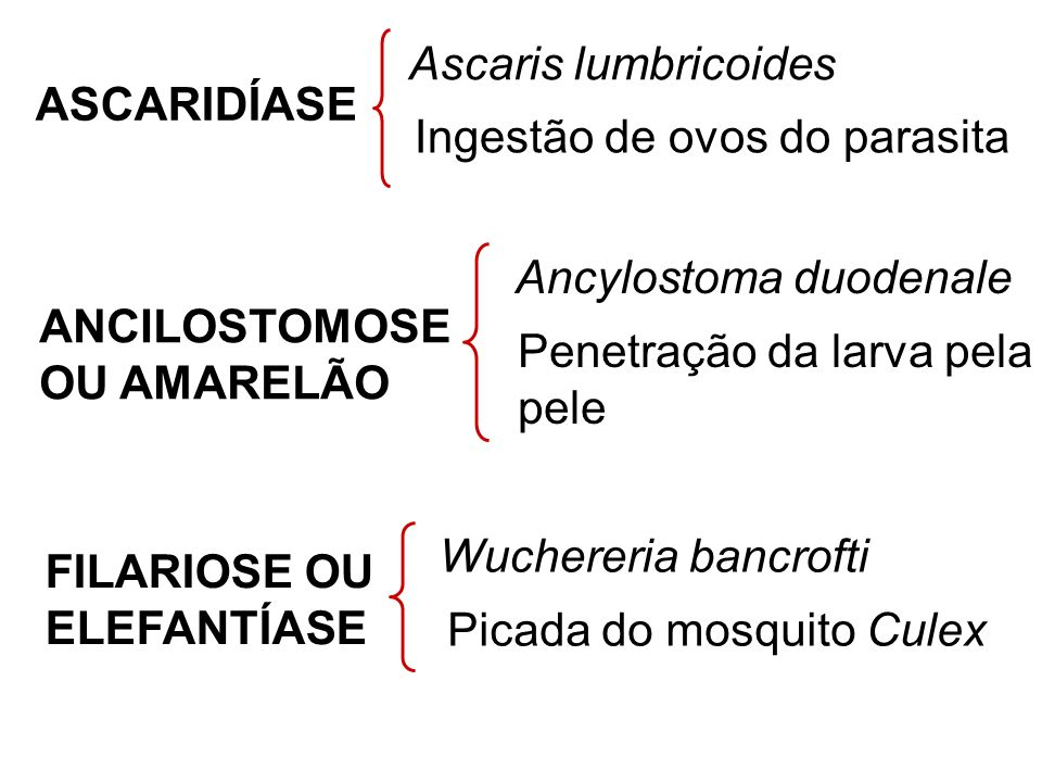 Ascaris lumbricoides ASCARIDÍASE. Ingestão de ovos do parasita. Ancylostoma duodenale. ANCILOSTOMOSE.