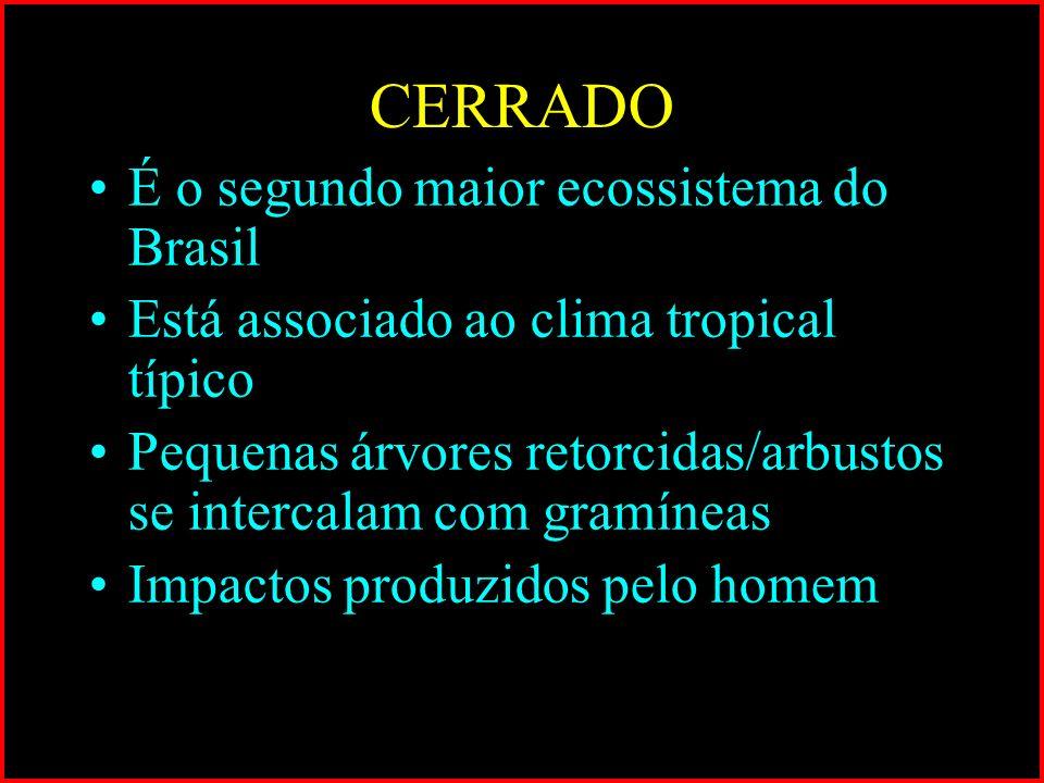 CERRADO É o segundo maior ecossistema do Brasil