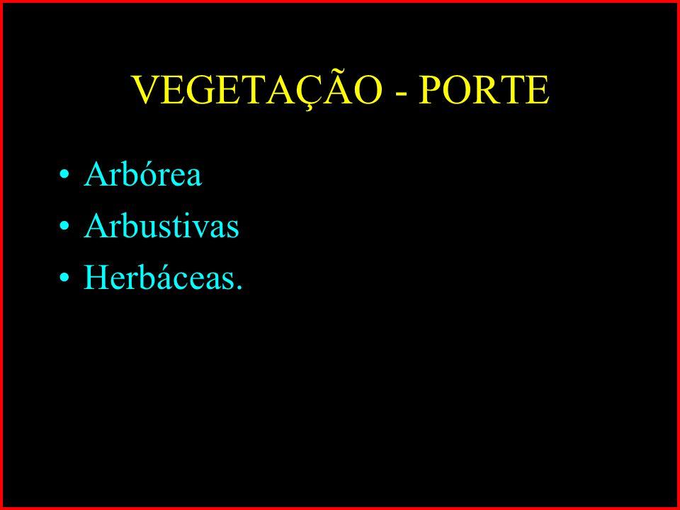 VEGETAÇÃO - PORTE Arbórea Arbustivas Herbáceas.