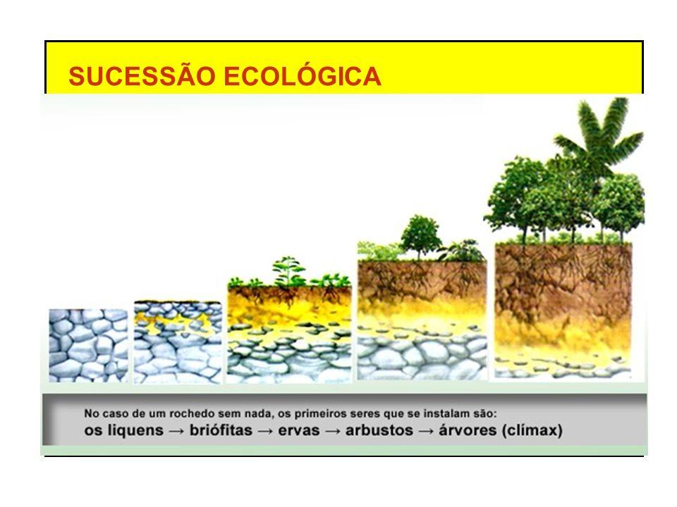 SUCESSÃO ECOLÓGICA ecese - inicial sere - intermediária FASES