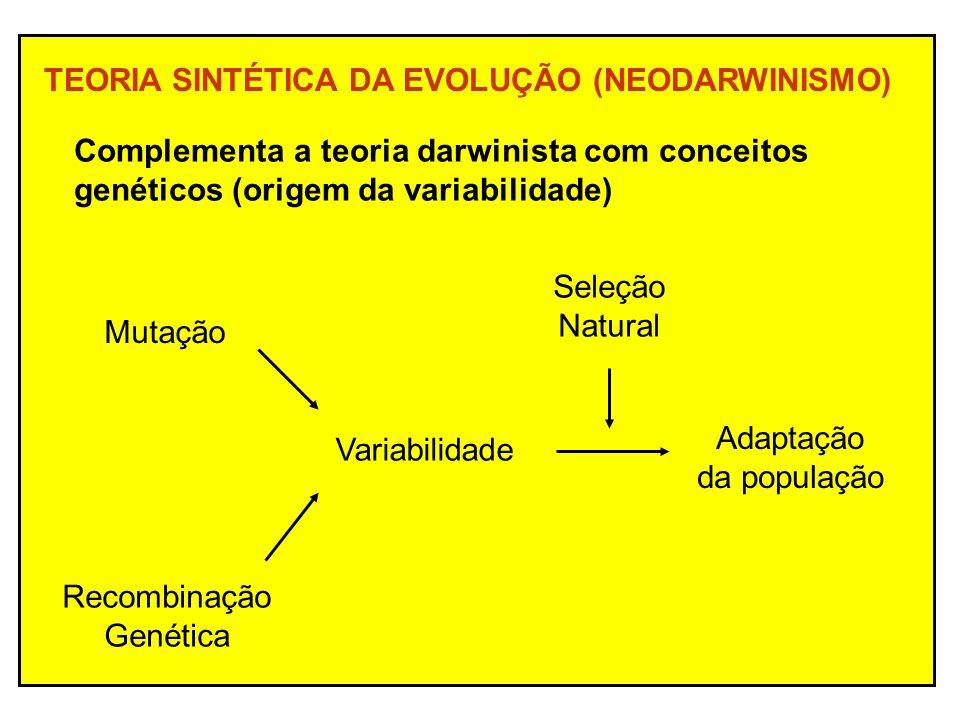 TEORIA SINTÉTICA DA EVOLUÇÃO (NEODARWINISMO)