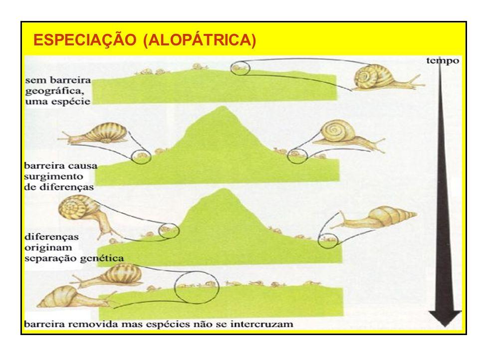 ESPECIAÇÃO (ALOPÁTRICA)