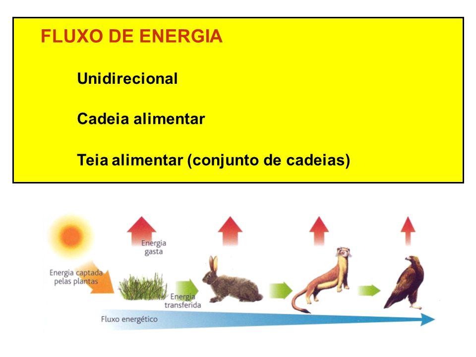 FLUXO DE ENERGIA Unidirecional Cadeia alimentar