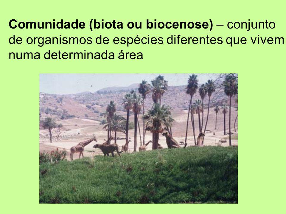 Comunidade (biota ou biocenose) – conjunto