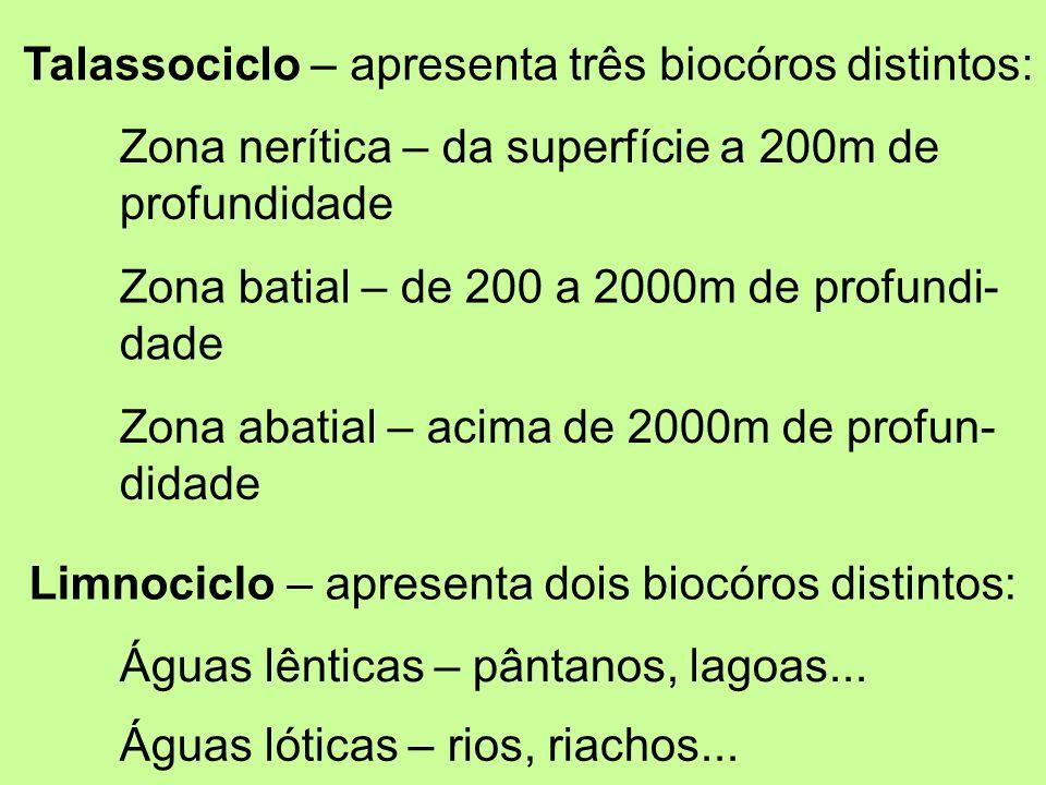 Talassociclo – apresenta três biocóros distintos:
