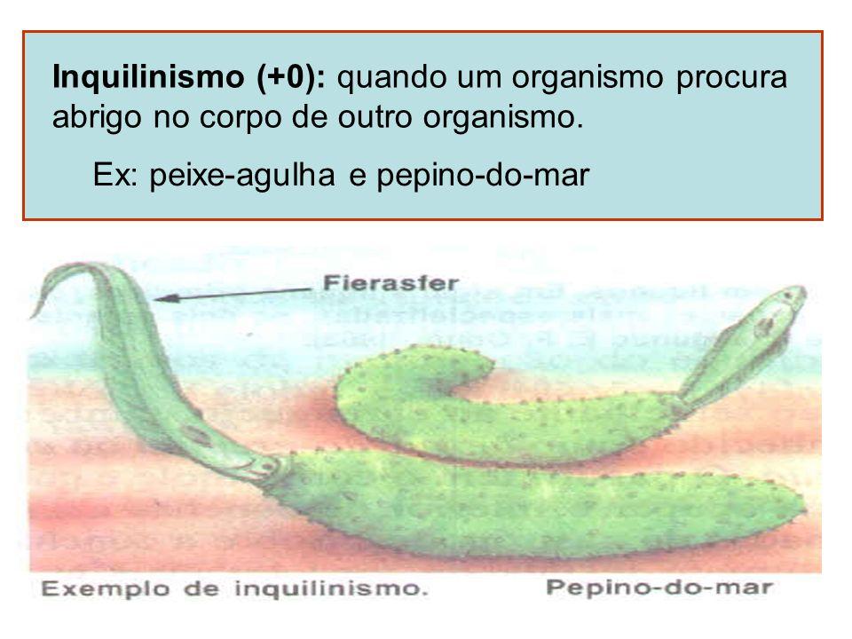 Inquilinismo (+0): quando um organismo procura