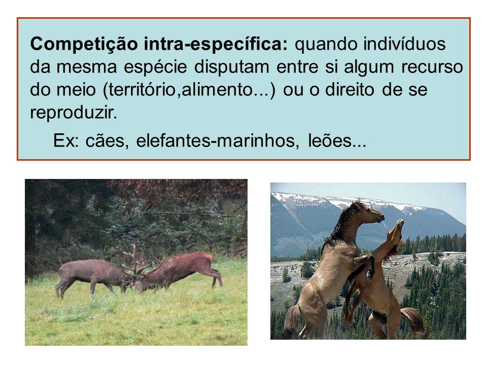 Competição intra-específica: quando indivíduos
