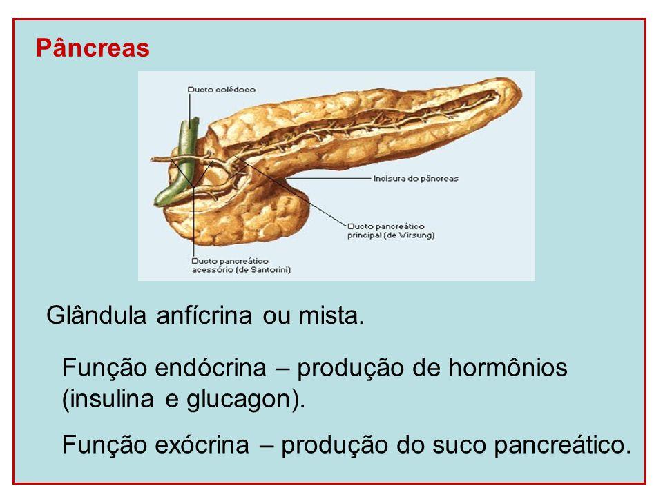 Pâncreas Glândula anfícrina ou mista. Função endócrina – produção de hormônios. (insulina e glucagon).