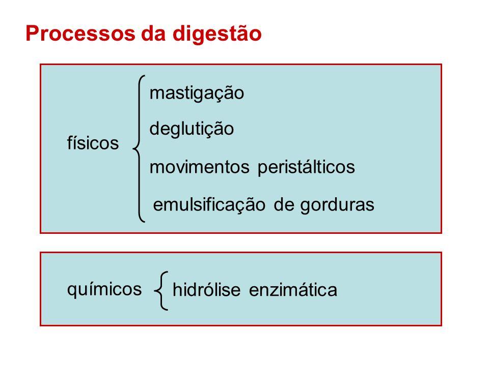 Processos da digestão mastigação deglutição físicos