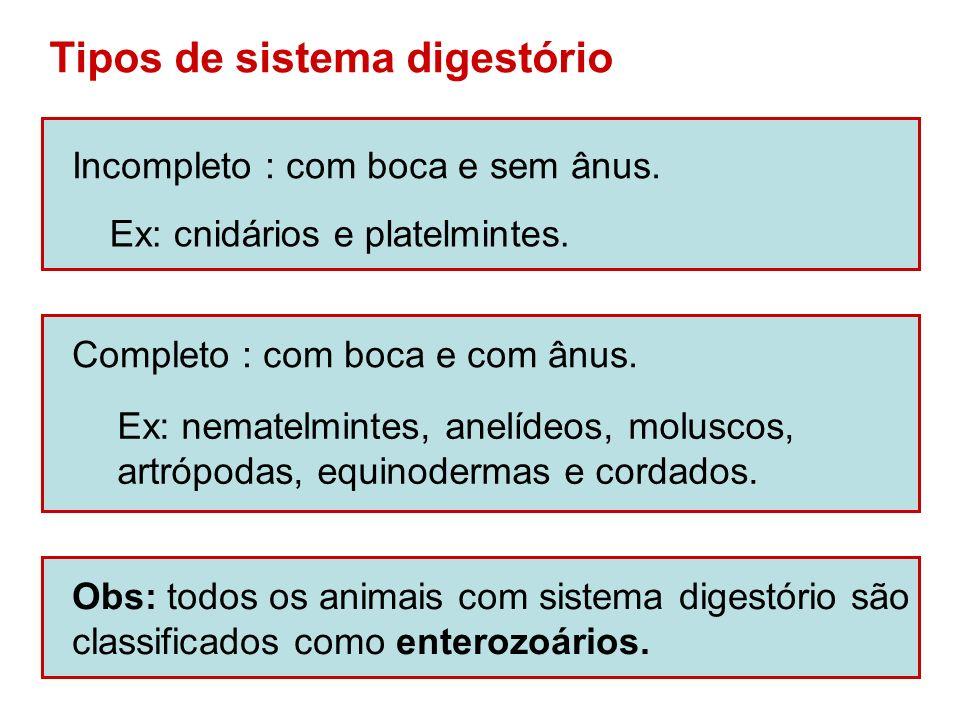 Tipos de sistema digestório
