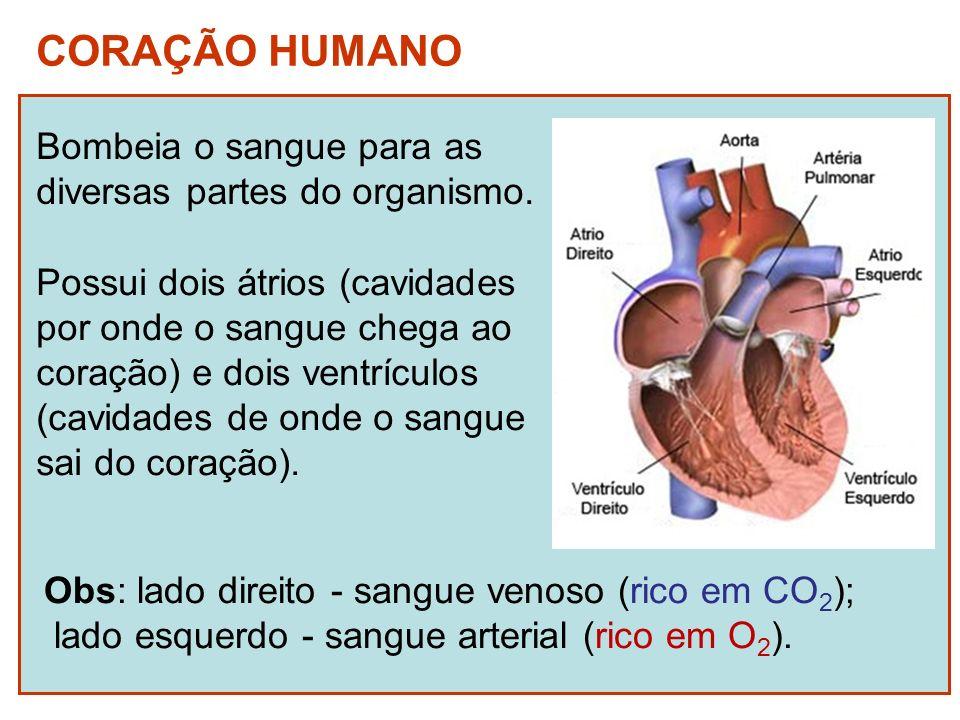 CORAÇÃO HUMANO Bombeia o sangue para as diversas partes do organismo.