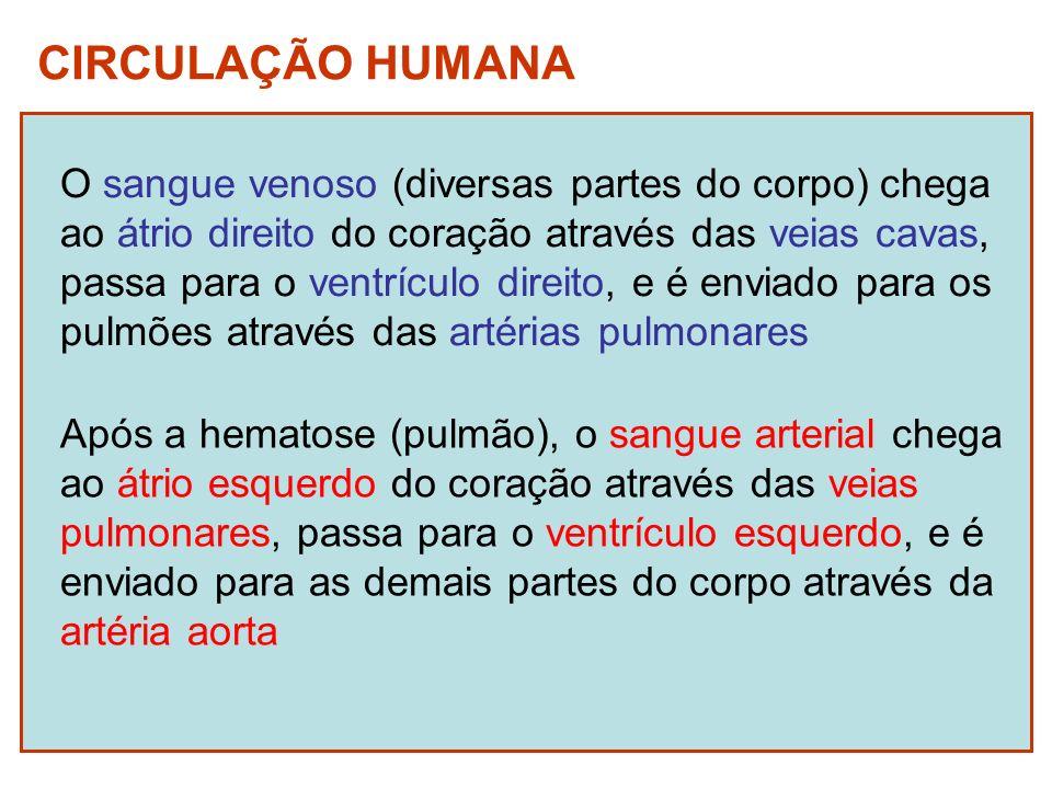 CIRCULAÇÃO HUMANA O sangue venoso (diversas partes do corpo) chega