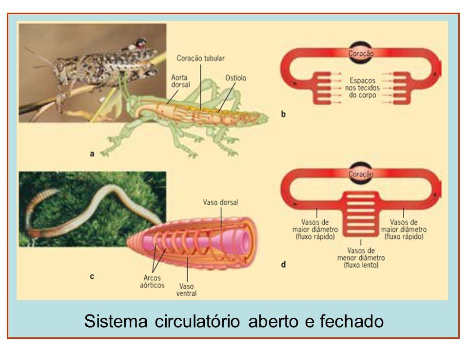 Sistema circulatório aberto e fechado