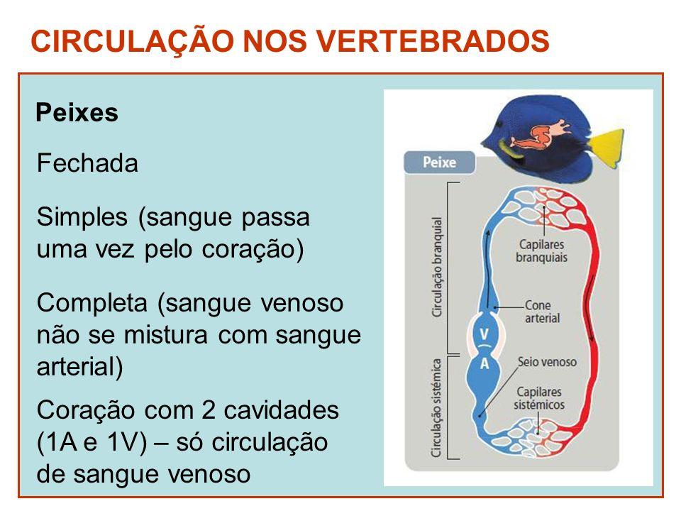CIRCULAÇÃO NOS VERTEBRADOS