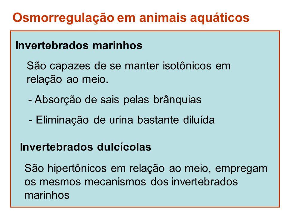 Osmorregulação em animais aquáticos