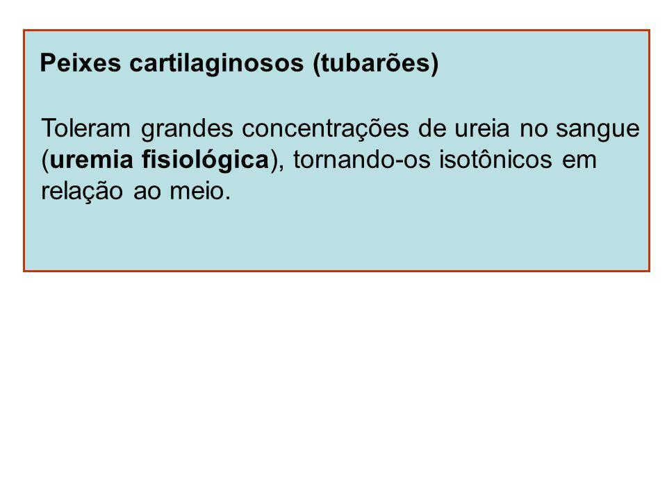 Peixes cartilaginosos (tubarões)