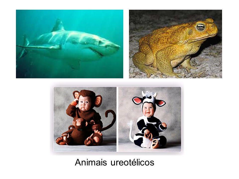Animais ureotélicos