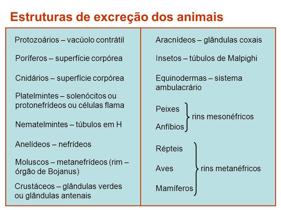 Estruturas de excreção dos animais
