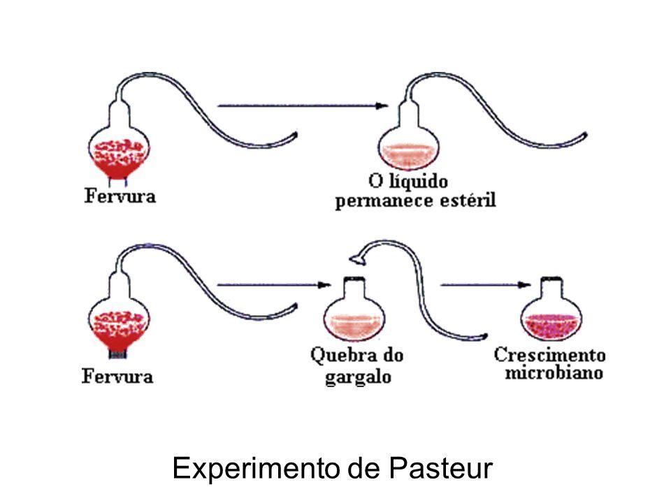 Experimento de Pasteur