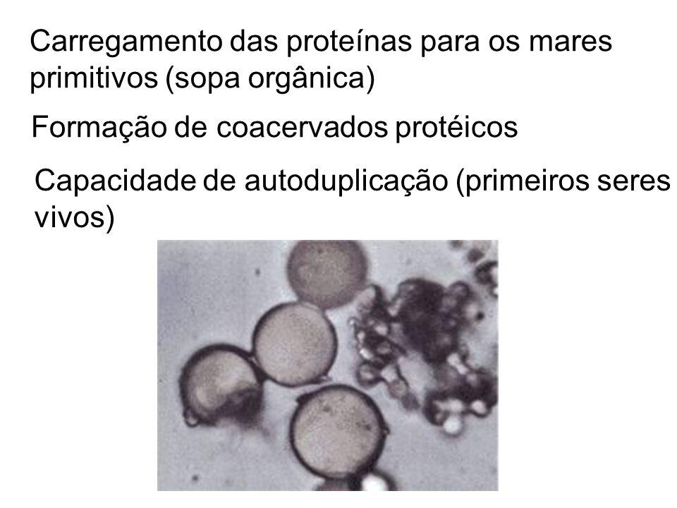 Carregamento das proteínas para os mares