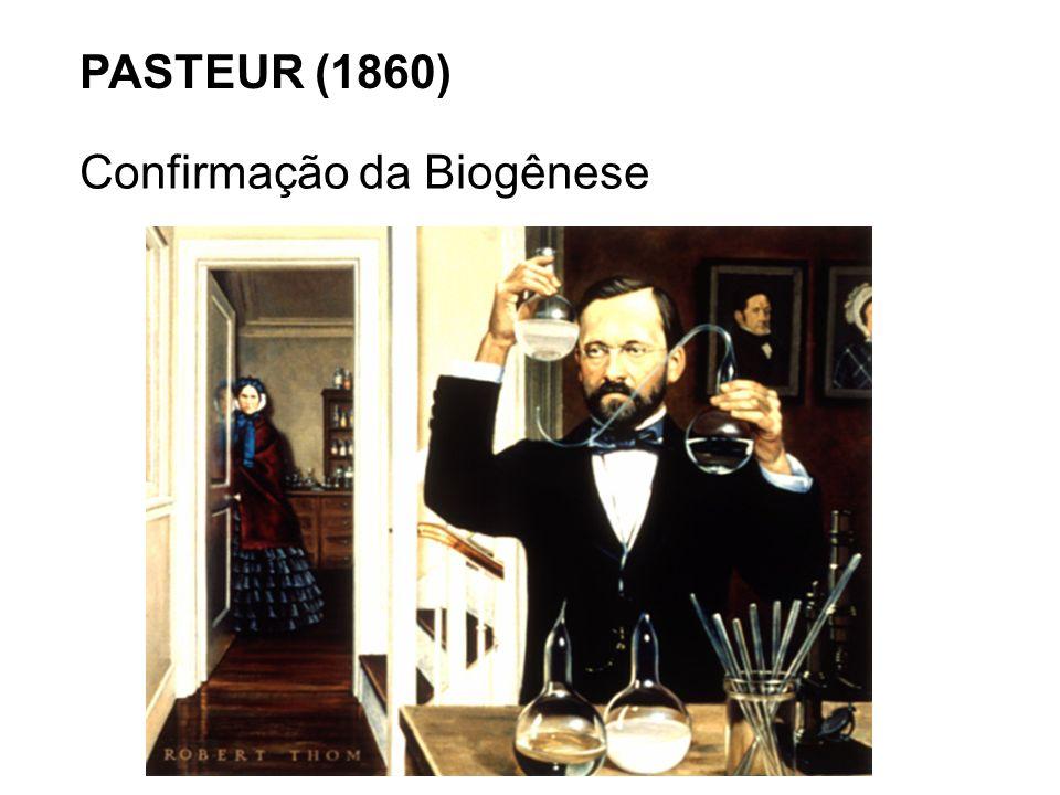 PASTEUR (1860) Confirmação da Biogênese