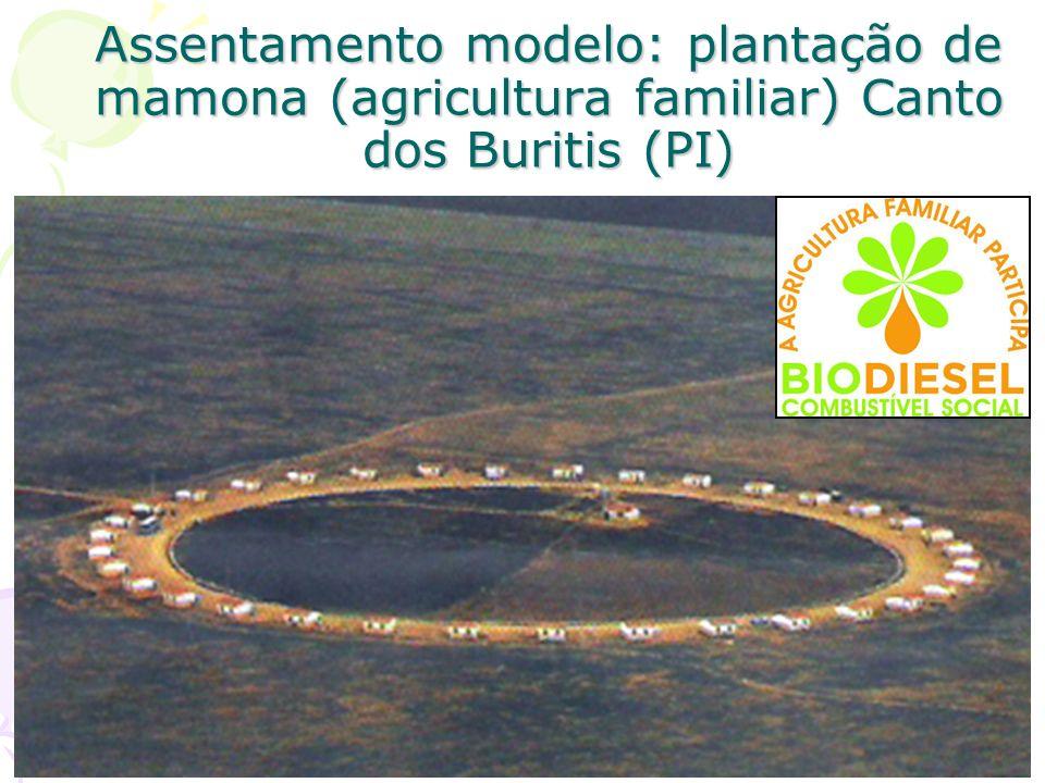 Assentamento modelo: plantação de mamona (agricultura familiar) Canto dos Buritis (PI)
