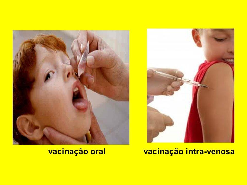 vacinação oral vacinação intra-venosa