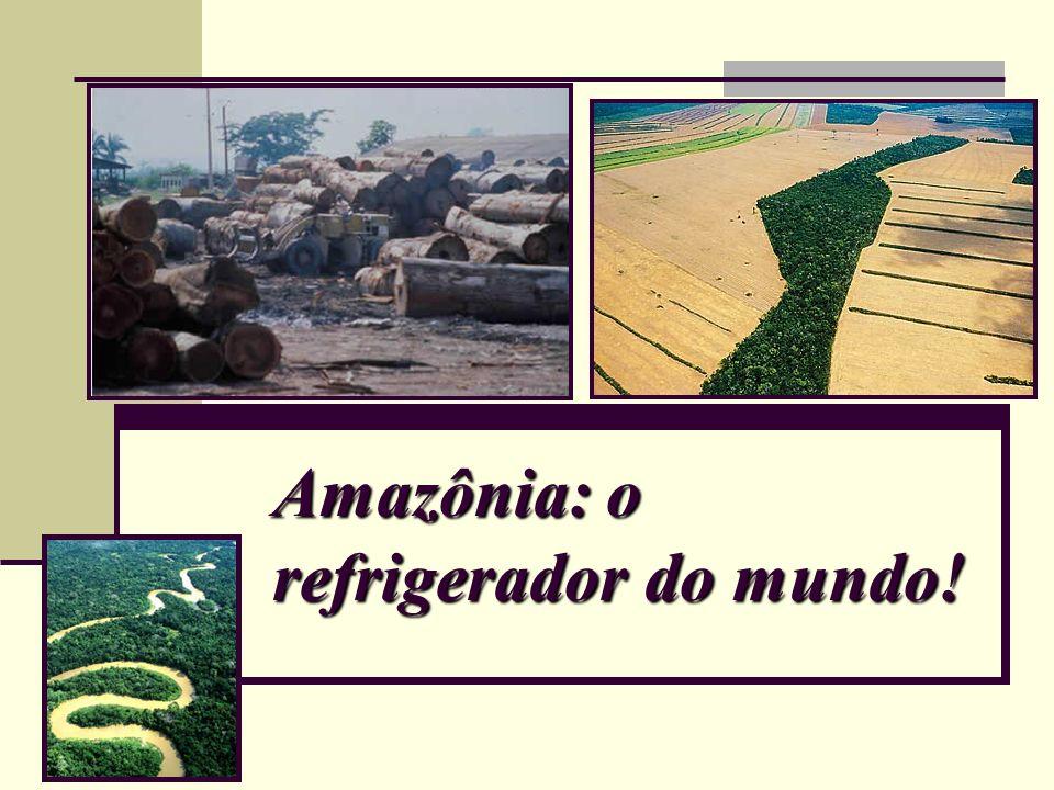 Amazônia: o refrigerador do mundo!