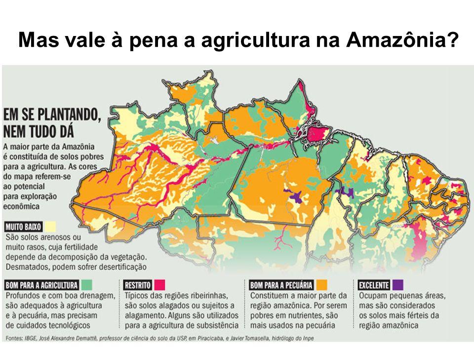 Mas vale à pena a agricultura na Amazônia