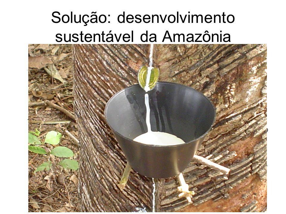 Solução: desenvolvimento sustentável da Amazônia