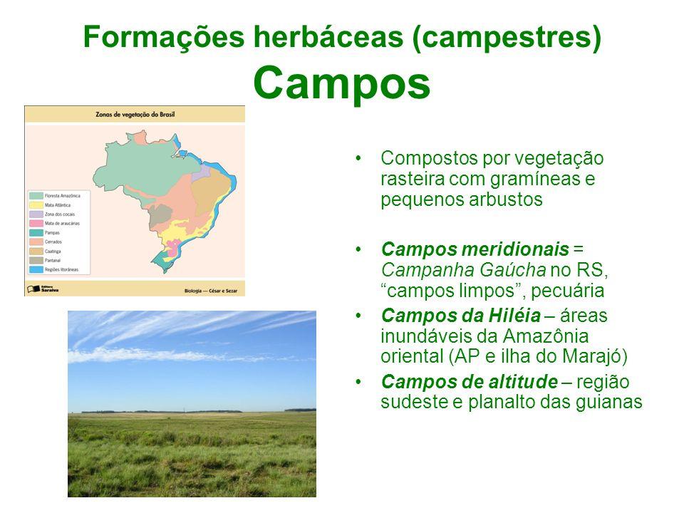 Formações herbáceas (campestres) Campos