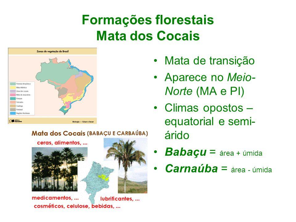 Formações florestais Mata dos Cocais