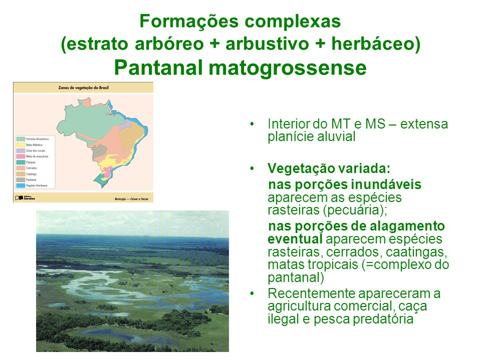 Formações complexas (estrato arbóreo + arbustivo + herbáceo) Pantanal matogrossense