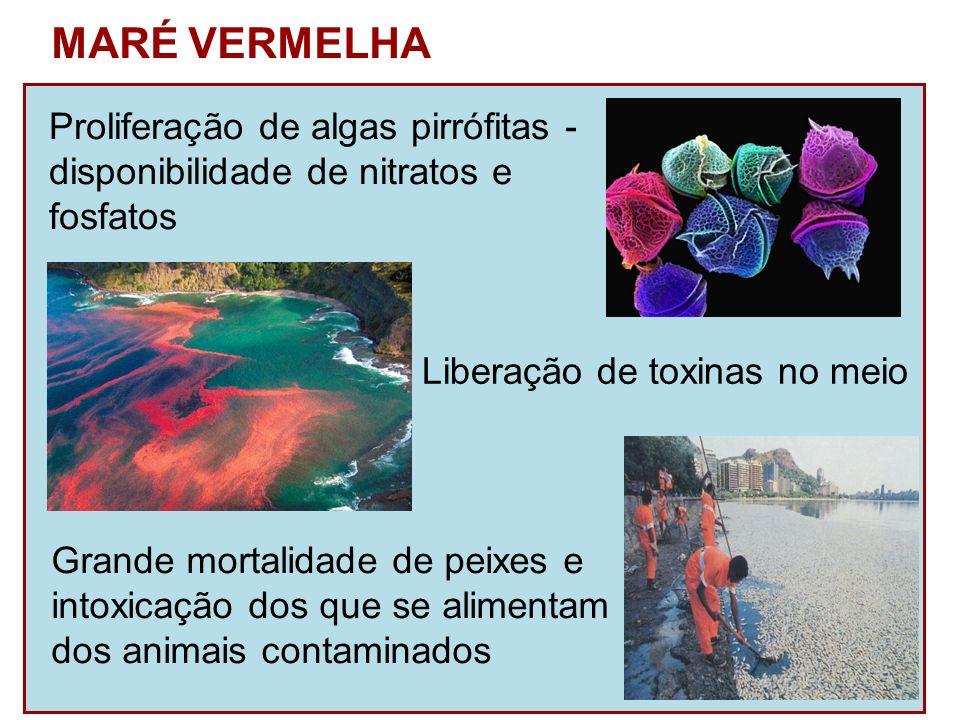 MARÉ VERMELHA Proliferação de algas pirrófitas -