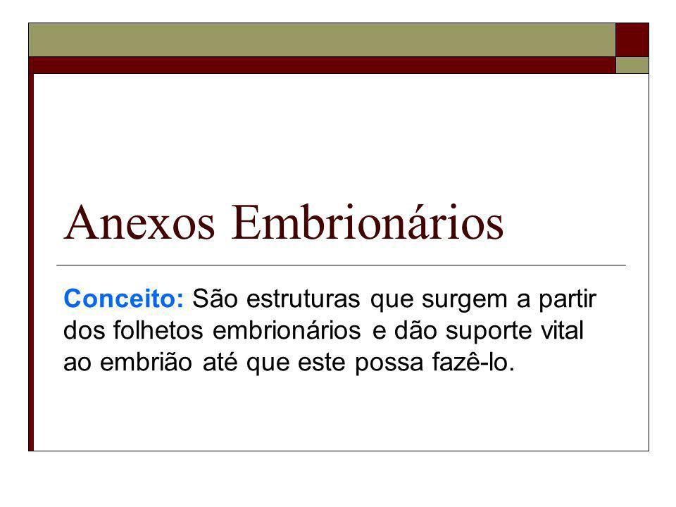 Anexos EmbrionáriosConceito: São estruturas que surgem a partir dos folhetos embrionários e dão suporte vital ao embrião até que este possa fazê-lo.