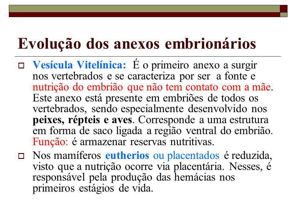 Evolução dos anexos embrionários
