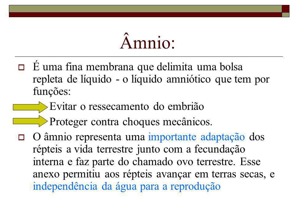Âmnio:É uma fina membrana que delimita uma bolsa repleta de líquido - o líquido amniótico que tem por funções: