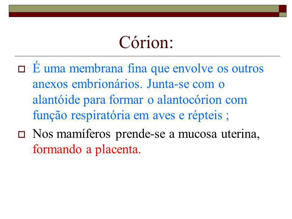 Córion: